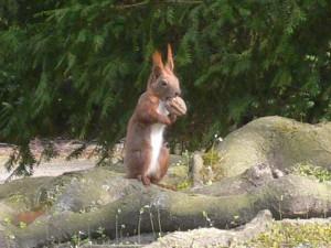 Wo verdammt wachsen denn im Frühjahr denn Nüsse? – Wer es nicht weiß: Eichhörnchen fragen.
