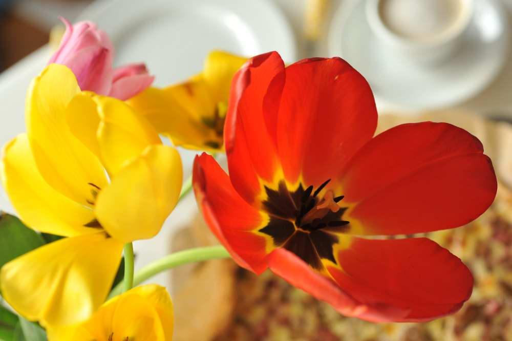 Farbklecks im Vordergrund mit Rhabarberkuchen als Hintergrund.