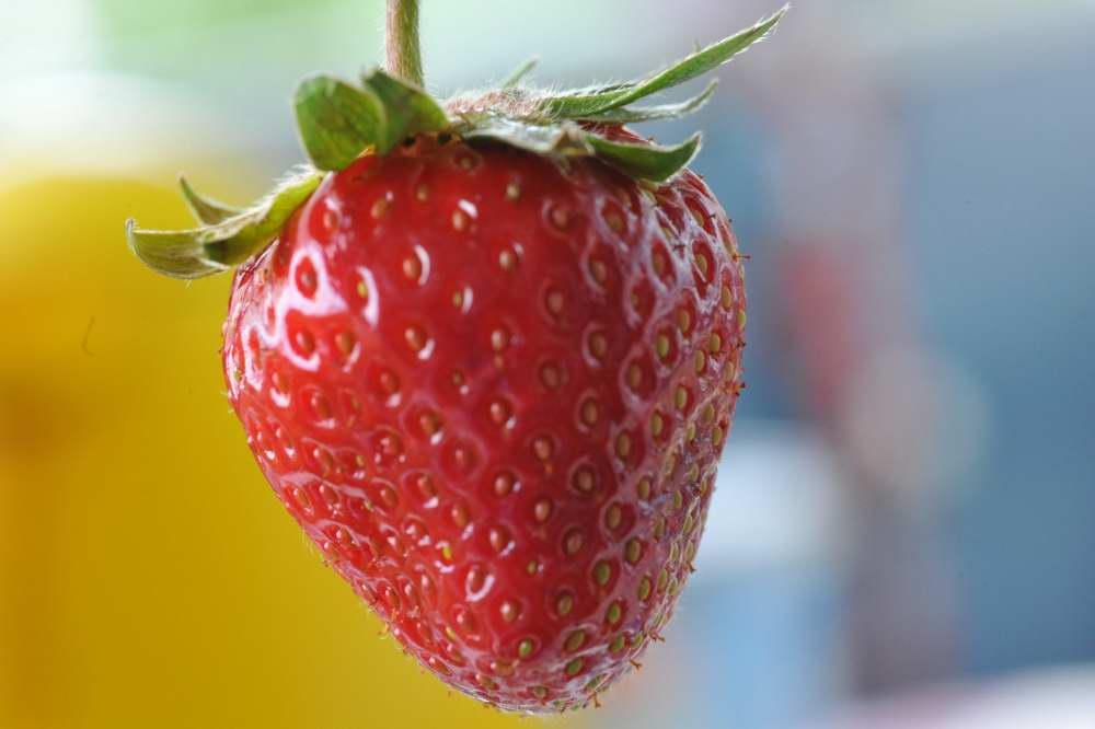 Mit dieser Erdbeere möchte ich die Erdbeersaison einläuten