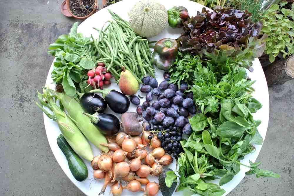 Unser Gemüseeinkauf vom dritten September