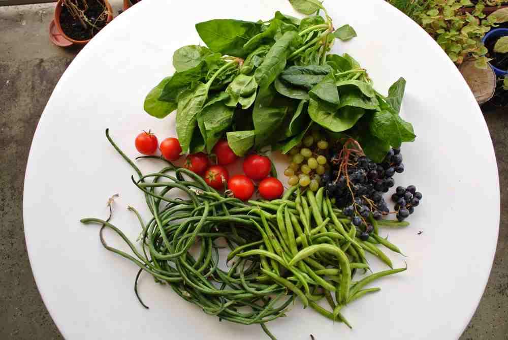 Spaghettibohnen und grüne Bohnen, rote Tomaten und Spinat ohne Schreibfehler und Trauben von zweierlei Farbe für den guten Geschmack